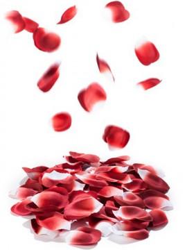 Rose pétal exploxion - Pétales parfumés